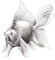 Goldfish Need Space Too - News - Bubblews