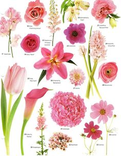 """Matrimonial Meg: Flower Power Have you ever found a picture of a bouquet and wondered, """"What is that flower?"""" Here is a collection of flower names sorted by color. A few bouquet examples are at the bottom and some non-tradi. Flowers Nature, Spring Flowers, Blush Flowers, Growing Flowers, Planting Flowers, Flower Chart, Fleurs Diy, Flower Identification, Flower Meanings"""