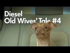 Cute Dog Tuna Melts Hearts In New Commercial Alongside Posse Of Grandmas - http://www.rescuedognews.com/cute-dog-tuna-melts-hearts-in-new-commercial-alongside-posse-of-grandmas/