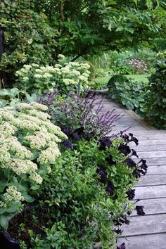 Gorgeous Green And White Garden To Create Calm Atmosphere - Pflanzideen Purple Garden, Shade Garden, Back Gardens, Outdoor Gardens, Amazing Gardens, Beautiful Gardens, Garden Cottage, Garden Villa, Landscape Design Plans