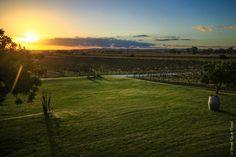 View from Artisans of Barossa Winery, Barossa Valley www.parkmyvan.com.au #ParkMyVan #Australia #Travel #RoadTrip #Backpacking #VanHire #CaravanHire