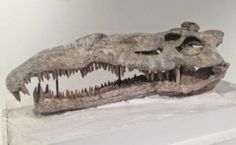 The Texas Panhandle once was home to a slew of creatures, big and small, ranging from horse-like mammals and saber-toothed cats to the phytosaur — a giant, crocodile-like reptile that slithered in the swamps. The Panhandle-Plains Historical Museum in Canyon has several fossil exhibits, including this phytosaur, a crocodile-like reptile that lived here millions of years ago [Credit: Amarillo]