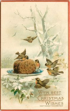 robins picking at plum pudding on plate in snow