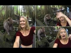 Who's a cheeky monkey?Tourist's selfie http://ift.tt/2lOl0Kj