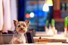 a-pranzo-con-il-cane