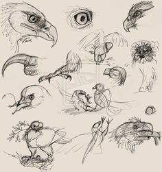 "Ballpoint pen on recycled Sketchbook paper (some Photoshoppery for clarity). Sketches drawn while watching the Sir David Attenborough documentary, ""Eagl. Creature Drawings, Bird Drawings, Animal Drawings, Animal Sketches, Drawing Sketches, Sketching, Digital Art Beginner, Anatomy Sculpture, Eagle Drawing"