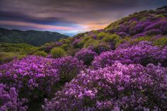 Mountain flowers in Hapcheon by Jae Youn Ryu