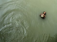 Swimming Picture -- Bangladesh Photo -- National Geographic Photo of the Day