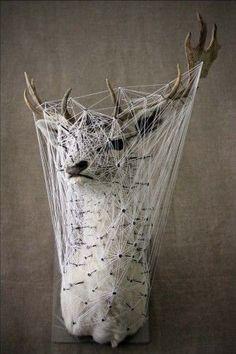The Paper Coyote: Julien Salaud