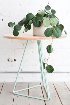 houseplant, home, side table, modern, styling, interior