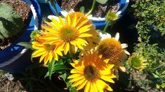 Garden Photos, Plants, Planets