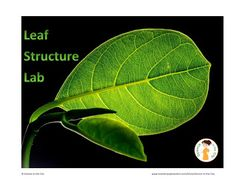If you are looking for a lab to do with your students that only uses a microscope and basic supplies here is a great one. I tested it out ahead of time and got very excited at how successful it was! I have used this lab to practice microscope skills experimental design skills homeostasis and adaptations or to teach leaf structure directly.