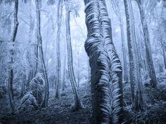 #4k wallpaper tree (3840x2880)