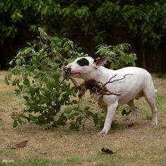 """help with the gardening?"" - Diablo"