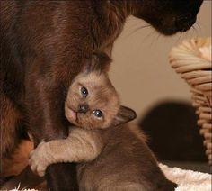 Gatet que necessita la mama!