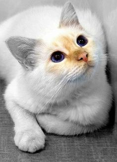 Cat with gorgeous eyes!
