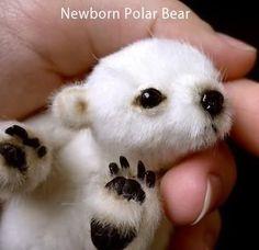 Newborn Polar Bear.... so cute!