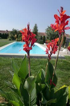 Swimming pool Venkovní bazén s masážním lehátkem a protiproudem