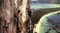 A rock climber climbing limestone cliffs on Ko Phi Phi Island, Thailand. Phi Phi Island, Top Of The World, Climbers, Rock Climbing, Hanging Out, Thailand, Palm, Scenery, Vacation