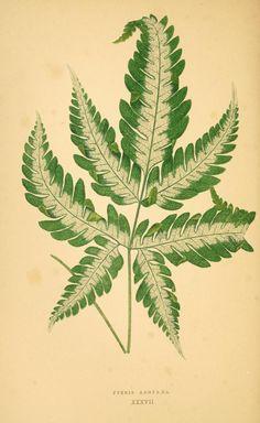 1 - Les plantes a feuillage coloré : - Biodiversity Heritage Library