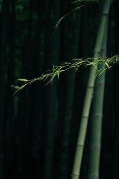 格格紫滟小采集到暗香(344图)_花瓣摄影