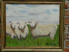 devonshire schapen