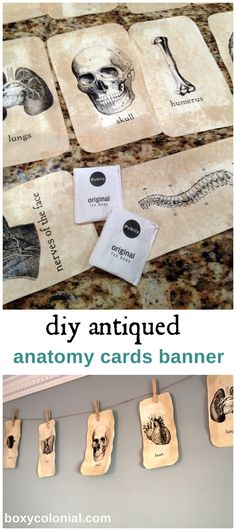 DIY Anatomy Banner: free printables and cards antiqued with tea