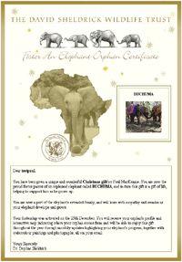 Adopt an Elephant Orphan - Foster an Elephant or Rhino Orphan  David Sheldrick Wildlife Trust