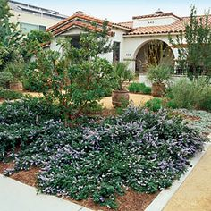 Since most California natives bloom in spring, combine them with plants that flower at other times. Blanc added butterfly weed (Asclepias tuberosa), coral fountain (Russelia equisetiformis), and Mexican lobelia (Lobelia laxiflora) for summer color.