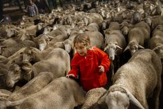 Max, age 10, runs by as shepherds lead their sheep through the center of in Madrid, Spain, on October 23, 2016. Shepherds guided a flock of 1,000 sheep through Madrid in defense of ancient grazing, droving and migration rights increasingly threatened by urban sprawl and modern agricultural practices. #  Daniel Ochoa de Olza / AP  Photos of the Week: 10/22–10/28 - The Atlantic