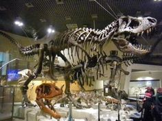 国立科学博物館 -- 恐竜!!  (Tokyo's National Museum of Nature and Science for dinosaurs, kahaku.go.jp)