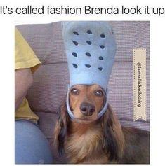 #dogfashion #fashionmeme #styleexpert #fashionadvice