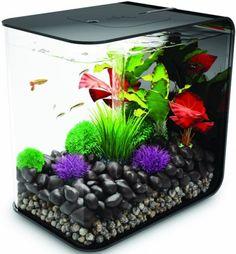 Cat proof fish tank home decor pinterest aquarium for Cat proof fish tank