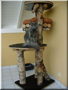 Výsledek obrázku pro plan d'arbre à chat