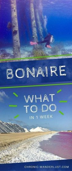 What to do in Bonaire in 1 week. Check out my favorite things to do in Bonaire like diving and so much more! Be sure to add Bonaire to your bucket list! Best Scuba Diving, Scuba Diving Gear, Cave Diving, Phuket, Amazing Destinations, Travel Destinations, Glamping, Wanderlust, Cruise Vacation