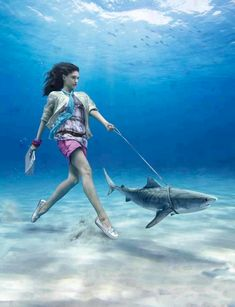 Shark Week: Fun Images to Sink Your Teeth Into