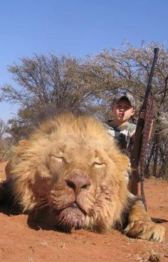 Child Abuse.... poor lion, lol this is so wrong.