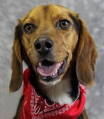 Kyle is one of our adoptable dogs. Click his picture to see if he is still available.