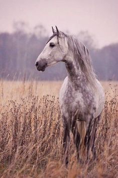 Beautiful horse in beautiful surroundings with a good photographer. This picture includes a very nice nature! - Jupinkle