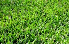Coated Bermuda Grass Seed We select and ship the newest crop seed with the best germination. Best Grass Seed, Growing Grass From Seed, Types Of Grass, Types Of Soil, Bermuda Grass Seed, Planting Grass, Lawn Care, Green Grass, Lawn And Garden