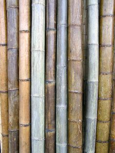 1000 images about natural bamboo poles on pinterest for Uses for bamboo canes