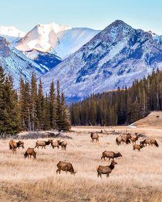 Deer (Banff, Alberta) by Robin Laurenson (Matanovich) (@motherpixels) on Instagram