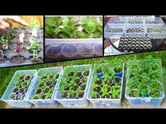 Starting Vegetable Seeds Tomato How to plant from seed grow square foot garden planting - YouTube