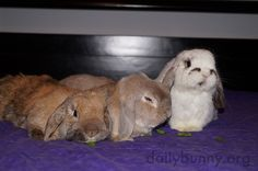 Sometimes it's hard to get bunnies to sit for photos - December 22, 2014 - More at today's Daily Bunny post: http://dailybunny.org/2014/12/22/sometimes-its-hard-to-get-bunnies-to-sit-for-photos/ !