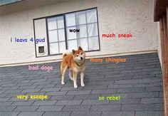 escaping Shibe Doge meme