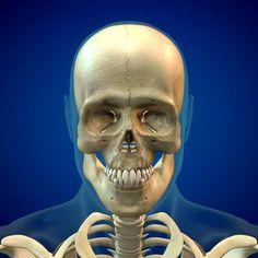 Human Skull Anatomy, Head Anatomy, Skull Reference, Body Reference, Scary Wallpaper, Skull Illustration, Sugar Skull Art, Trap Music, Skull Design