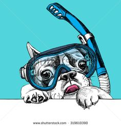 The poster with the portrait of a French bulldog in the diving mask. Vector illustration.
