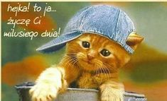 Animals And Pets, Good Morning, Crochet Hats, Humor, Cats, Funny, Blog, Pictures, Motto