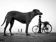 Image result for elliott erwitt dogs