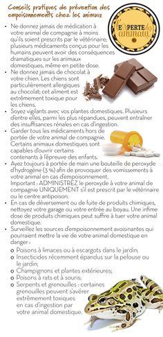 Conseils pratiques de prévention des empoisonnements chez les animaux